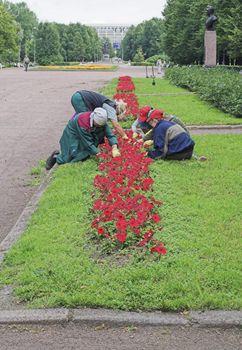 Women Doing Gardening in City Park