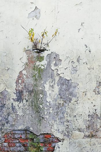 Corroded Wall and Tree Branches