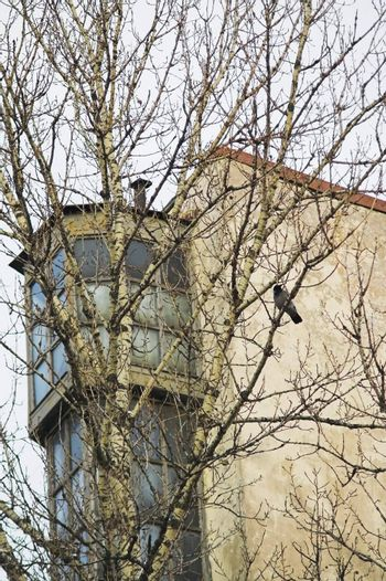 An upper part of a building seen from ground, and a crow perching on a tree nearby.