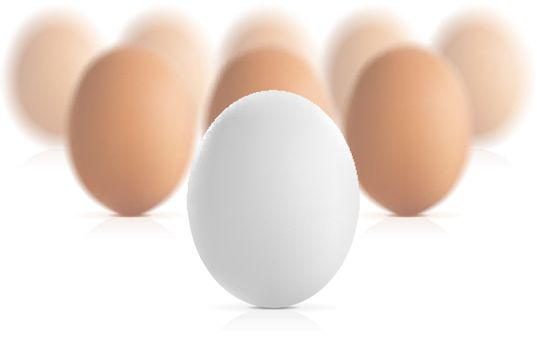 Egg concept vector illustration isolated on white background