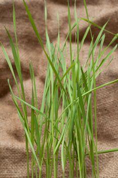 Green herb on sackcloth