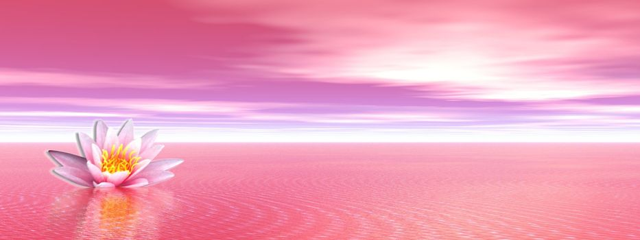 Pink lily flower in the pink ocean