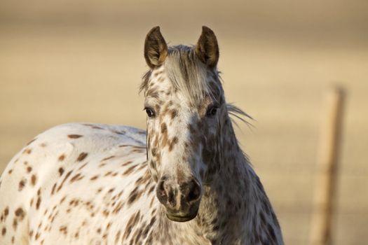 Horse in Pasture Canada