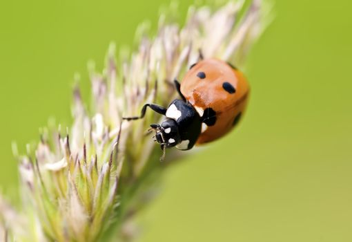 close up view of a ladybug