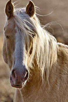 Horse Close Up Canada