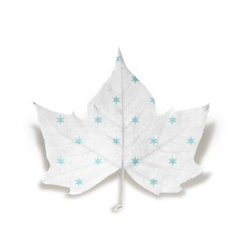 Fall leaf with light blue stars texture isolated over white background with clipping path, so you can easily cut it out and place over the top of a design.