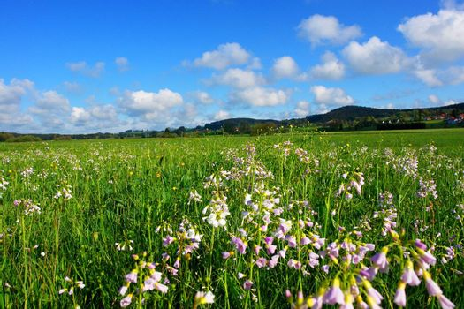 a beautiful summer landscape on a sunny day