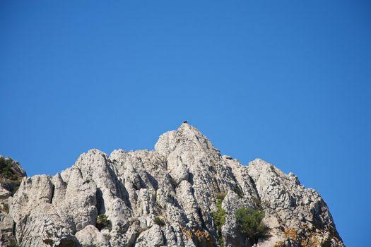 vulture on great rock peak