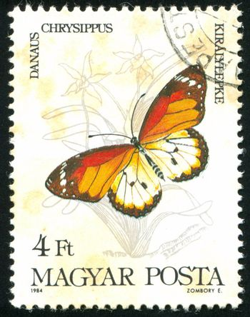 HUNGARY - CIRCA 1984: stamp printed by Hungary, shows butterfly, circa 1984