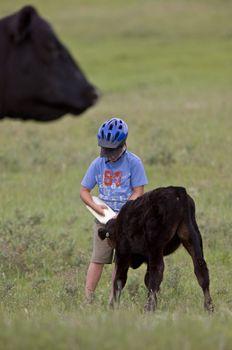 Boy feeding calf