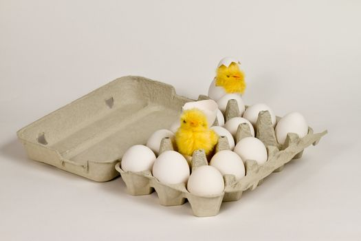 Newly hatched toy chicks in eggbox with white eggs.
