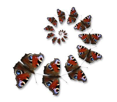 Butterflies flying in spiral