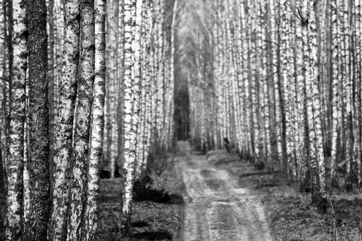 Biebrza forest