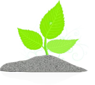 Young plant on the white backgrounds. Vector illustration