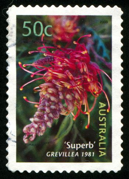AUSTRALIA - CIRCA 2003: stamp printed by Australia, shows Superb grevillea, circa 2003