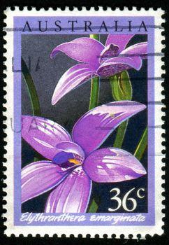 AUSTRALIA - CIRCA 1986: stamp printed by Australia, shows Orchid, circa 1986