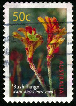 AUSTRALIA - CIRCA 2003: stamp printed by Australia, shows Bush Tango kangaroo paw, circa 2003