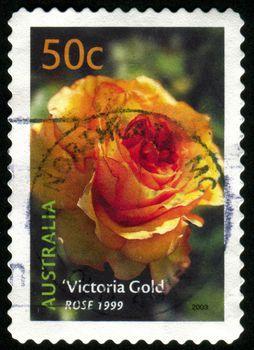 AUSTRALIA - CIRCA 2003: stamp printed by Australia, shows Victoria Gold rose, circa 2003