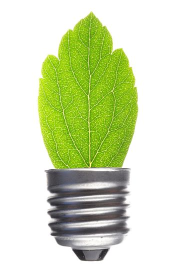 green leaf and bulb isolated on white showing ecological power concept