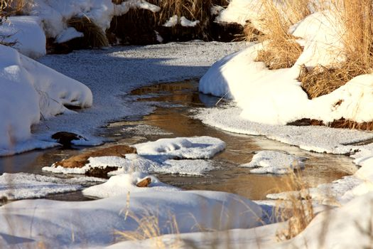 Icy Stream in Winter