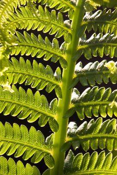 Close up fern Canada