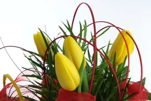 Yellow tulips bouquet isolated on white background