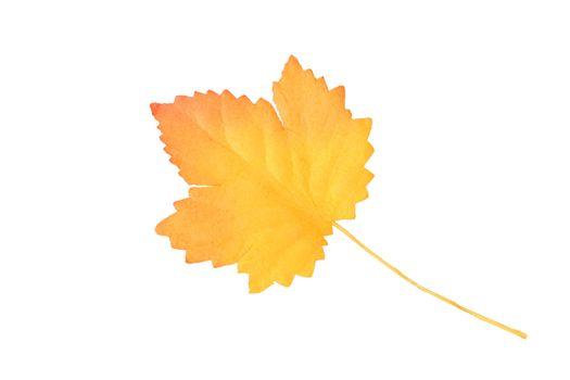 Artificial yellow-orange autumn leaf on white background