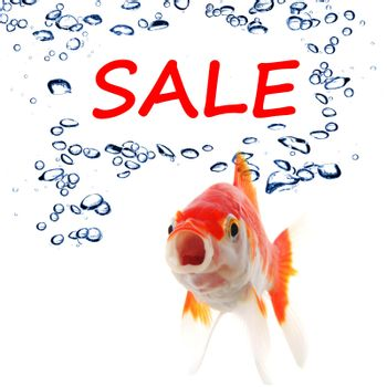 sale marketing or shopping concept with goldfish on white