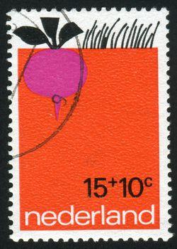 NETHERLANDS - CIRCA 1971: The radish grows in the earth, circa 1971.