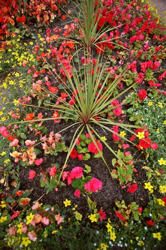 Floral arrangement at Prince Rupert, British Columbia