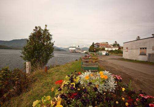 Flowers along seacoast of Prince Rupert