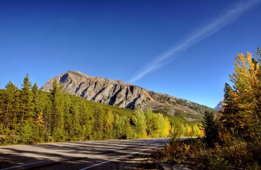 Road view of forests and mountains in Jasper National Park