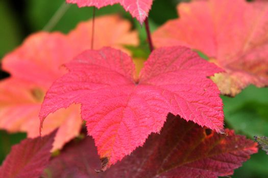 colorful broad leaves in autumn