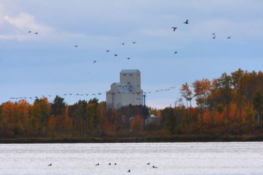 Waterfowl taking flight from water in autumn