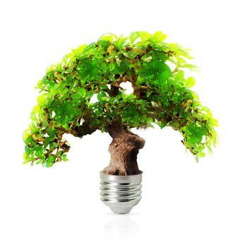 eco energy lamp isolated on white background