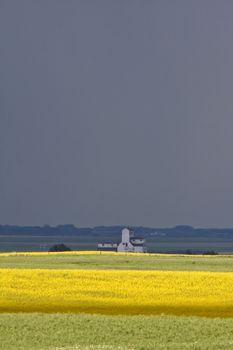 Flax and canola crops in Saskatchewan