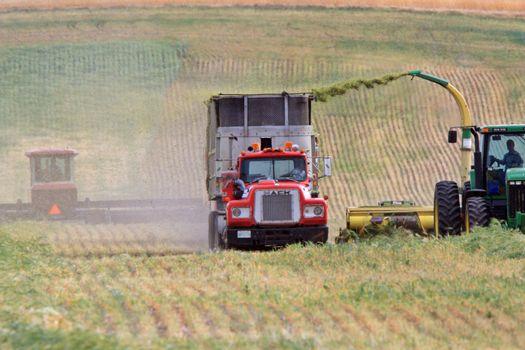 Harvesting fodder in Saskatchewan