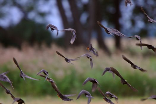 Flock flying in formation