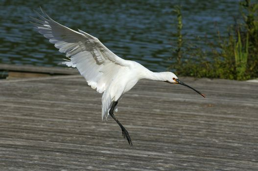 Salvage goose