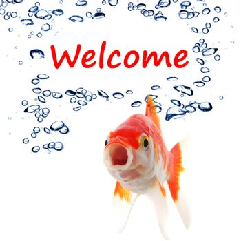 welcome concept with word and goldfish on white