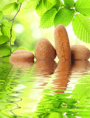 zen stones and green leaves showing spa concept with water reflection