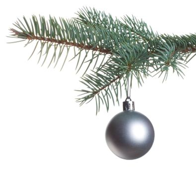 close-up silver ball on fir branch, isolated on white