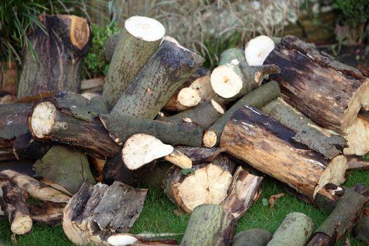 Freshly cut logs