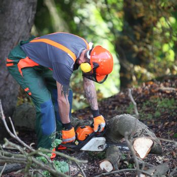 A forest worker in wood saws