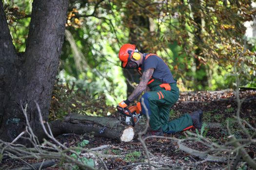 A forest worker makes wood