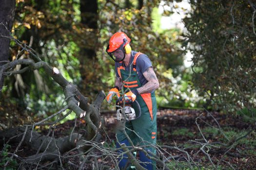 Forest workers in working with chainsaw