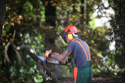 Forest workers or lumberjacks sawing - horizontally