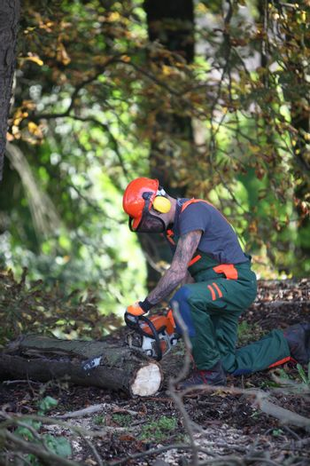 A forestry worker sawing a tree trunk.
