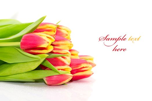 Bouquet of the fresh tulips on white background(With sample text)