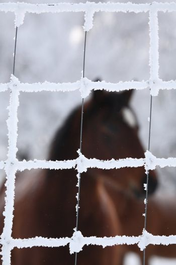 Horse viewed through frost covered fence